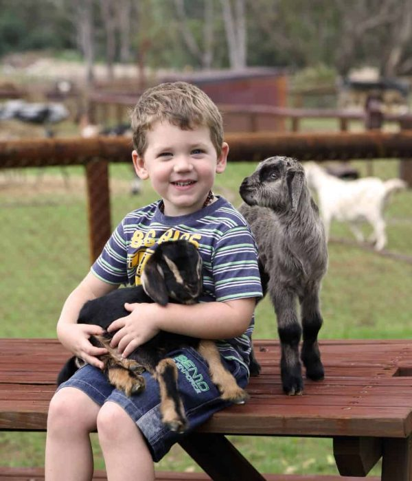 Swan Valley Cuddly Animal Park